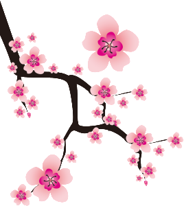 sakura画像
